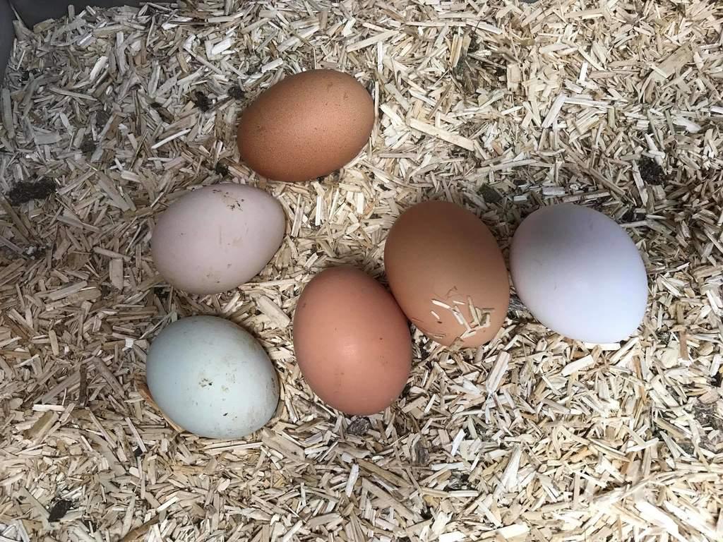 Aubiose Bedding 20kg Poultry Bedding Chicken Coops Walk In