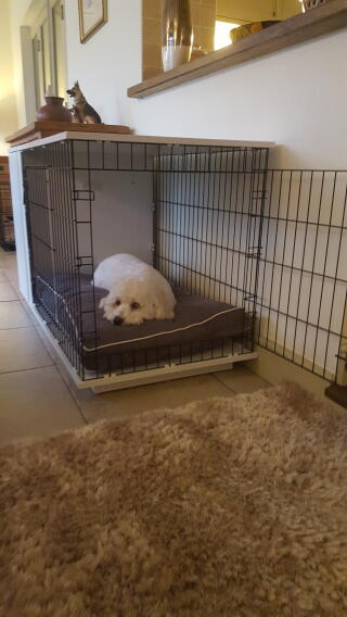 Cody loving his new crate - did not want to get out!