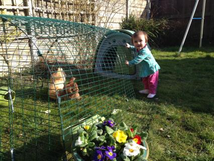 Our new Pekins with our 10 month old daughter lucy