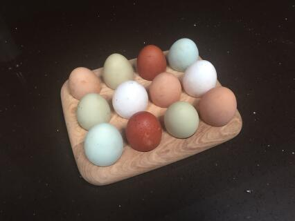 Mixed flock of 8 producing such a variety of eggs