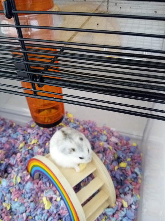Rainbow Play Bridge For Small Animals Hamster Gerbil Toys