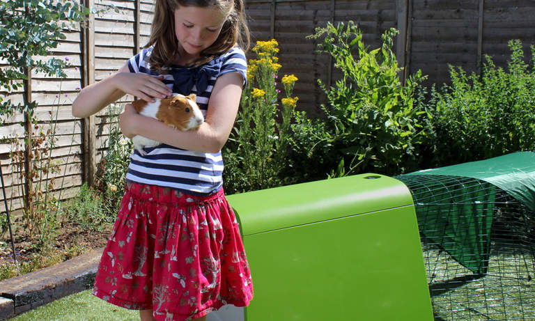 Kids will love spending time with their pet guinea pigs