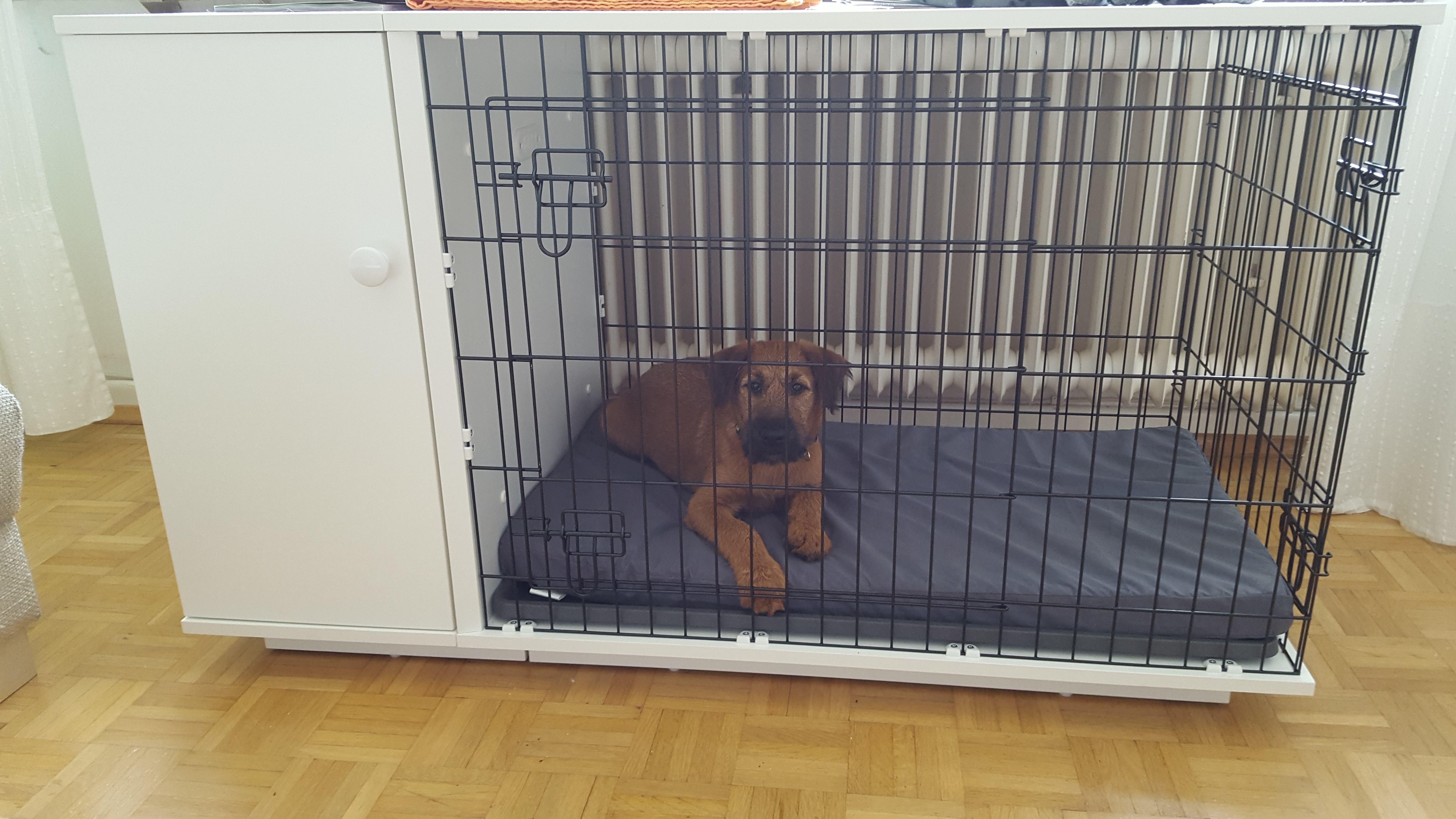 new fido dog crate  dog products  omlet - irish terrier