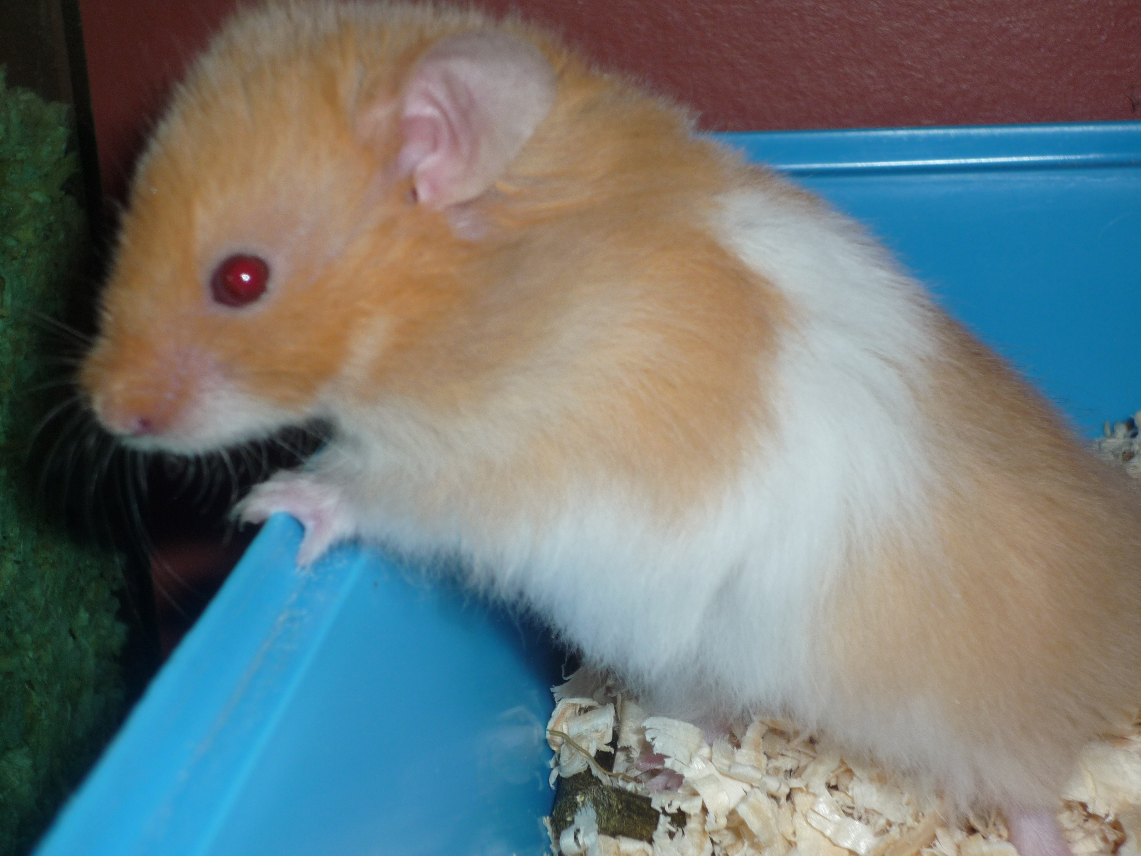 History | About Hamsters | Hamsters | Guide | Omlet UK