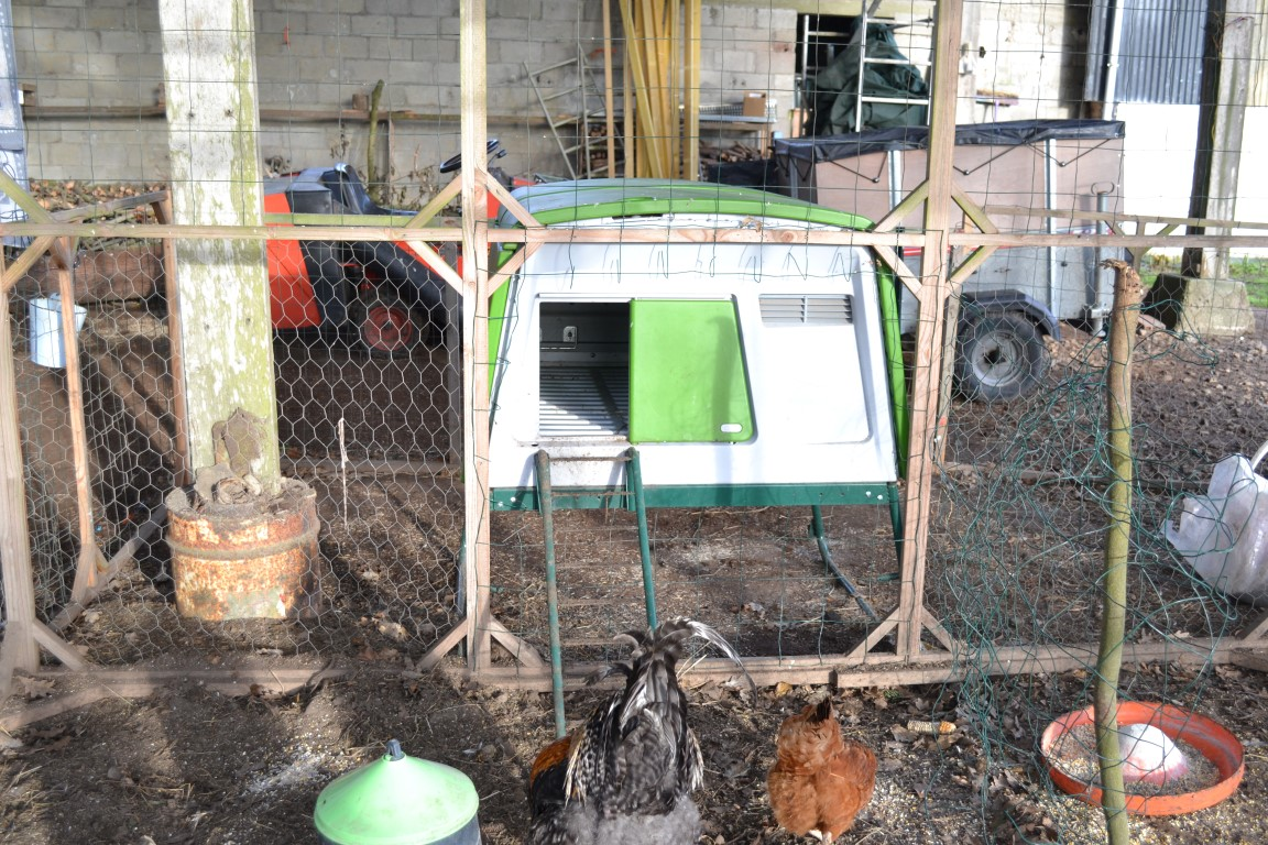 new eglu cube chicken coop chicken coops and pet chicken accessories omlet. Black Bedroom Furniture Sets. Home Design Ideas