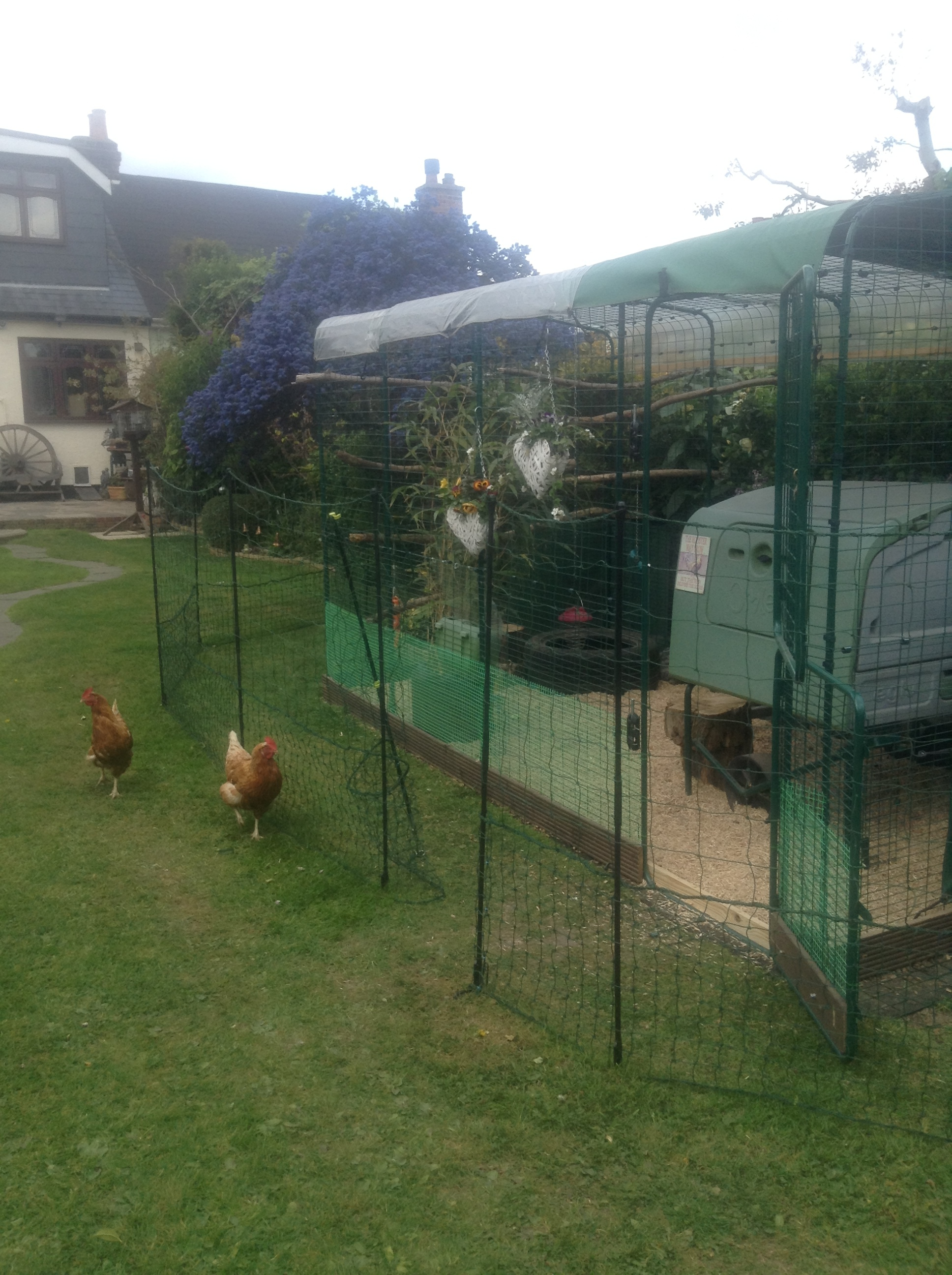 Omlet chicken fencing chicken keeping omlet great fencing for keeping chickens out of main garden when needed baanklon Gallery