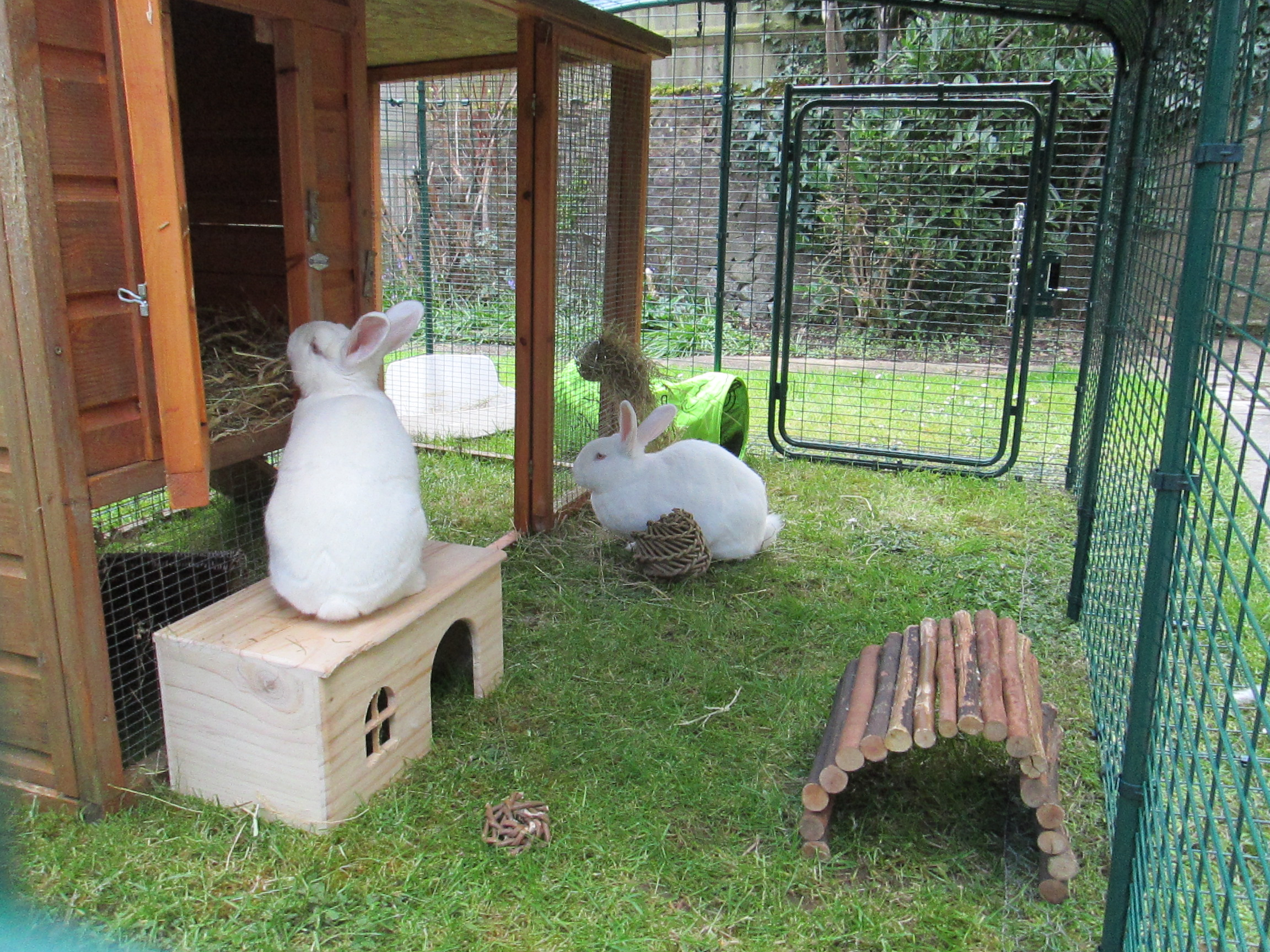 in run from guinea by housing a the joiners with pet hutch pin uk wood s made shed large rabbit solid boyle pig