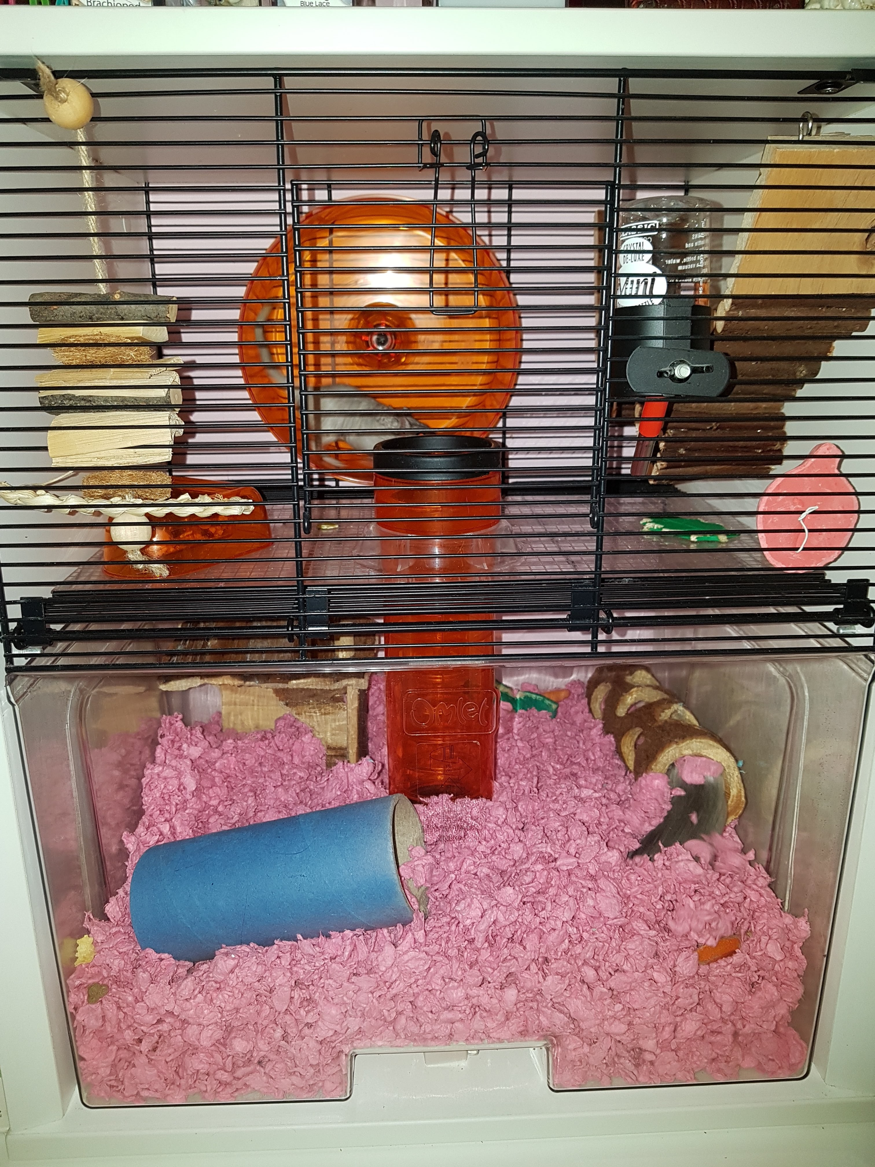 Qute Hamster Amp Gerbil Cage Stylish Hamster House